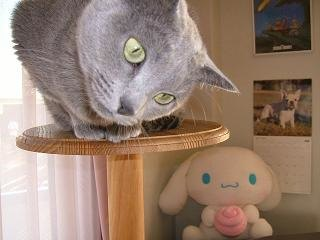 首をかしげている猫