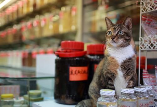 漢方薬の瓶と子猫