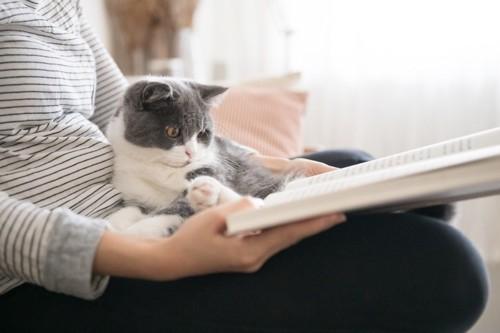 一緒に本を読む猫