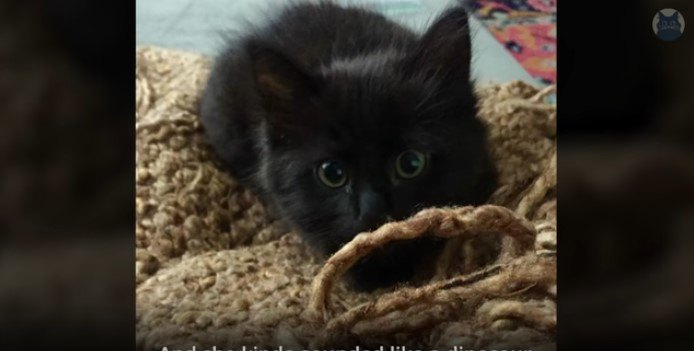 子猫のリジー