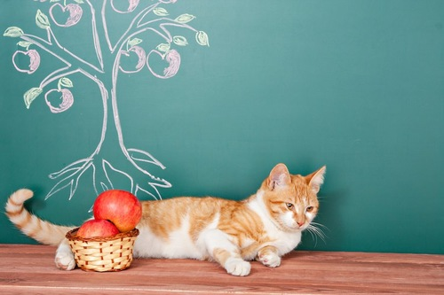りんごの木が描かれた黒板とカゴに入ったりんごと猫