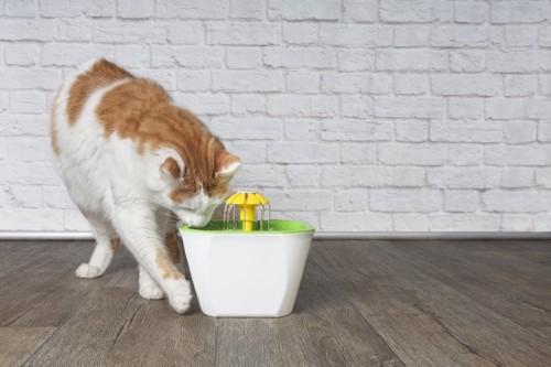 給水器の水を飲む猫