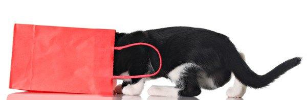 紙袋に入っていく猫