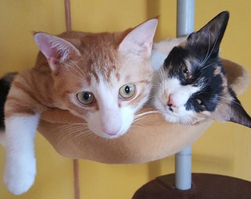 ネコリパブリックの猫たち2