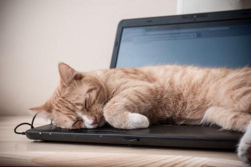 キーボードで眠る猫