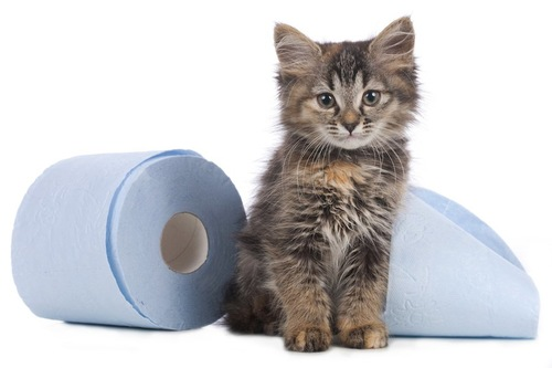 トイレットペーパーの横に座る子猫