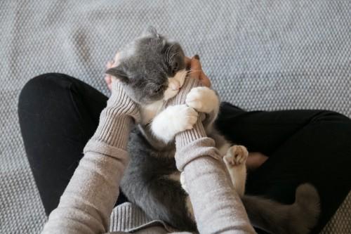 飼い主の手を掴んでじゃれつく猫
