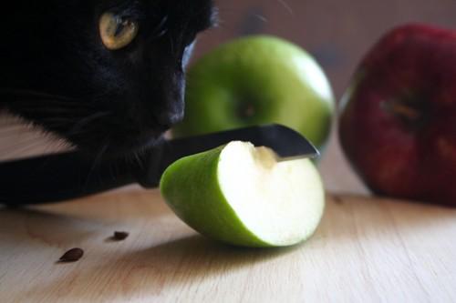 青リンゴと猫