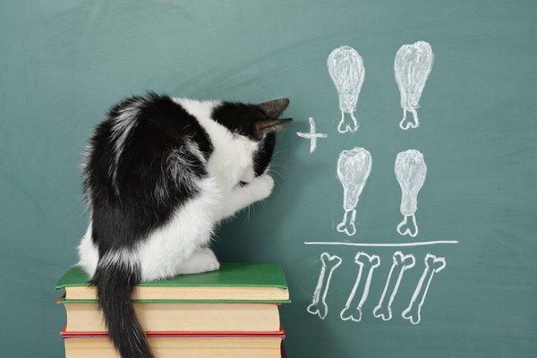 チキンの絵が黒板に描いてあるのを見る猫