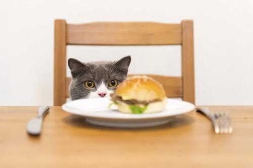 テーブルの上のハンバーガーと椅子にのってそれを見る猫