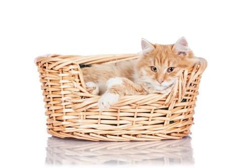 カゴベッドの中で眠る猫