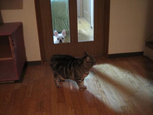 ドアを挟んだ猫と犬の写真