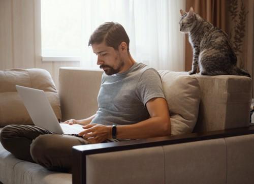後ろにいる猫を構わず仕事をする男性
