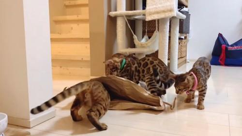 米袋にまわりにいる4匹の猫