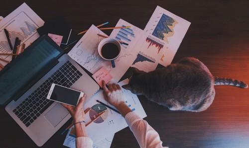 事務作業をする人と猫