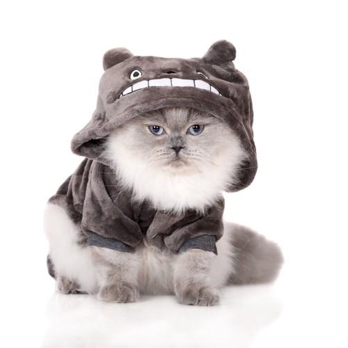 猫が被るパーカー
