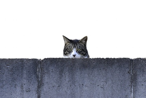 壁から顔だけ出してこちらを見る猫