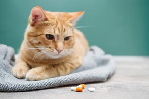 薬を乗せた人の手と猫