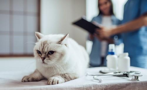 動物病院に連れてこられた猫