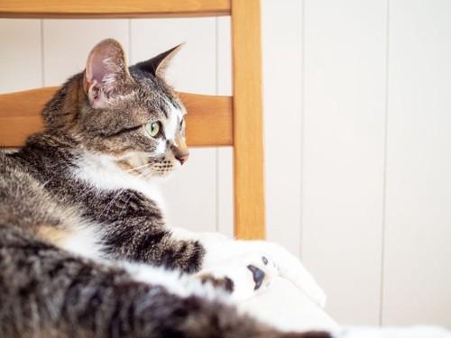 イスの上にいる猫