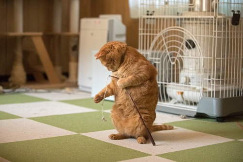 一人で遊ぶ猫