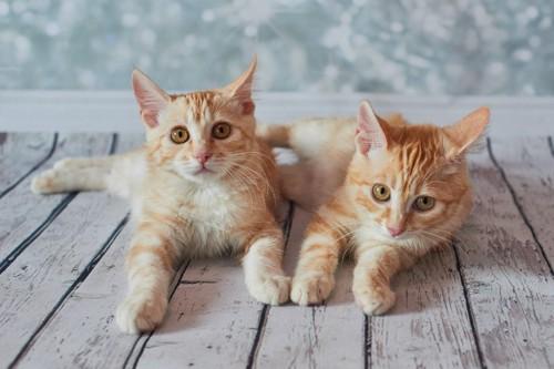 こちらを見ている2匹の子猫