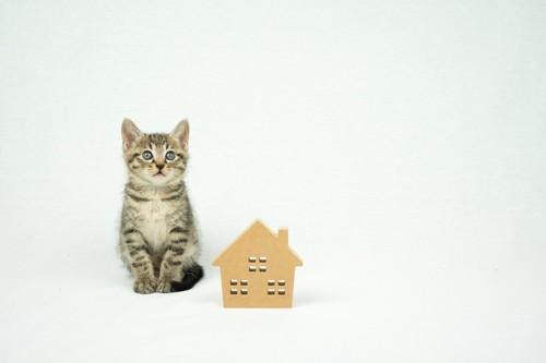家の形の置物と隣に座る子猫