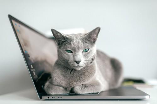 無反応な猫