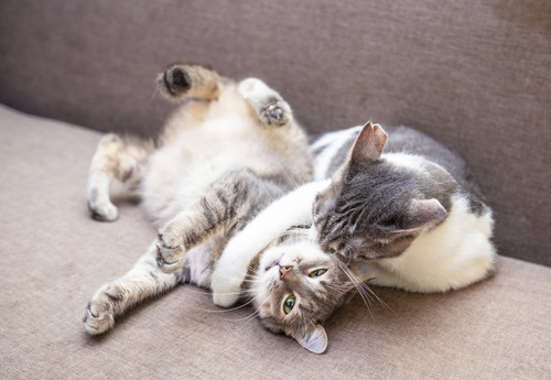 2匹の猫が遊んでいる姿