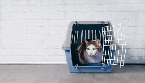 クレートの中にいる猫
