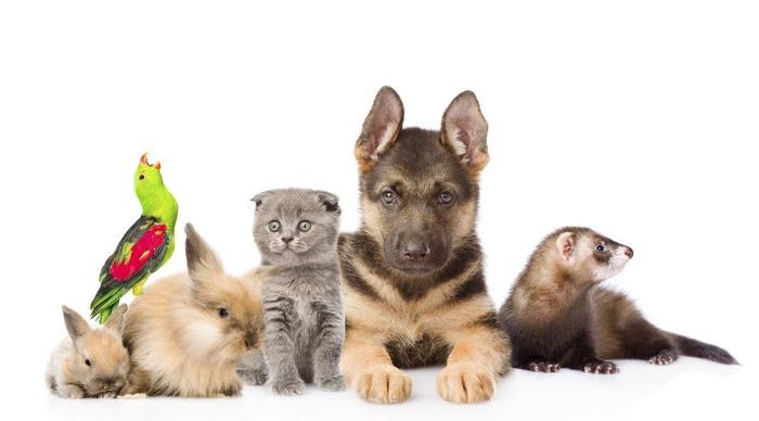 猫・フェレット・他の動物たち