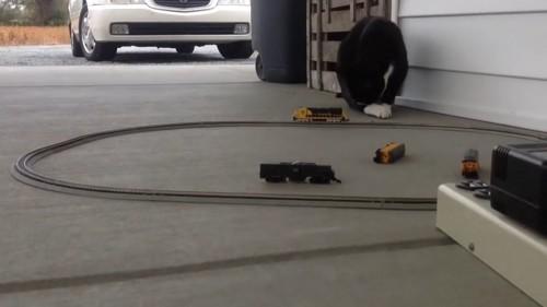 別の猫は興味なさげ