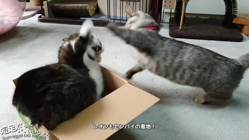 前足をあげる2匹の猫