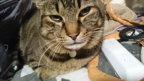 猫は可愛いけど困るマーキング問題