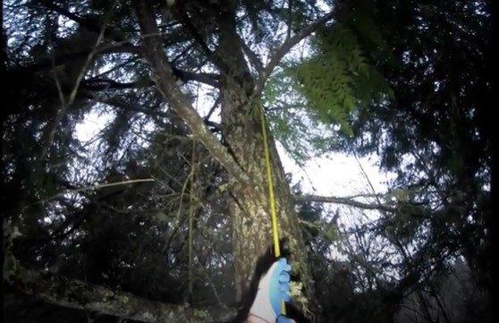 ビンクスが立ち往生した木