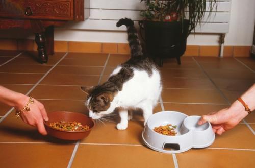 2つのフードを出されている猫