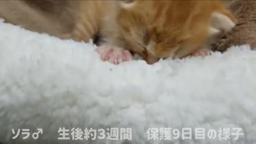 ベッドで落ち着く猫