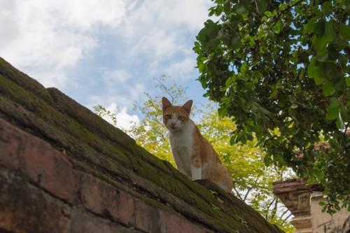 塀の上からこちらを見下ろす猫