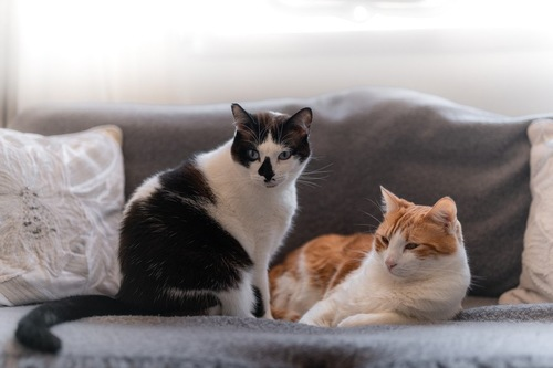 ソファーでくつろぐ猫たち