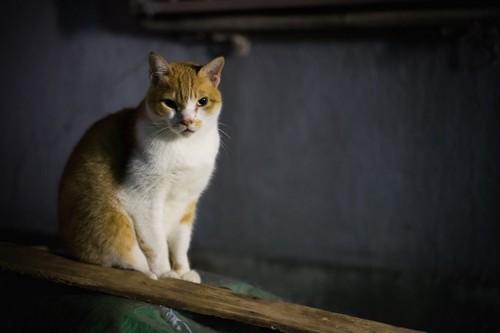 薄暗い中で座る猫