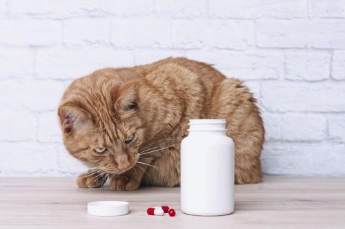 白いボトルと薬をジッと見つめる猫