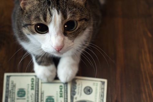 お金を前に座る猫