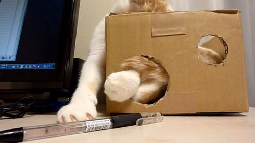 箱で顔が隠れている猫