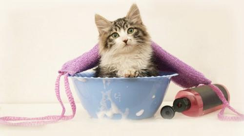 青い洗面器に入った猫とシャンプーのボトル
