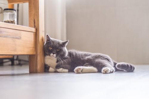 離れた場所から見つめる猫