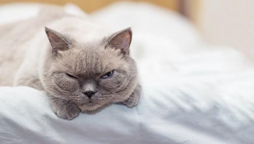 片目をつむる猫