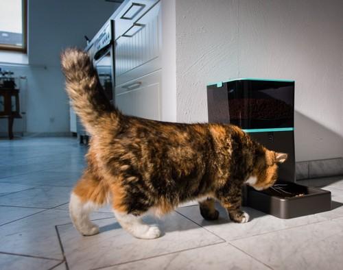 自動給餌器に近づく猫