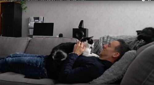 飼い主様とラブラブな猫