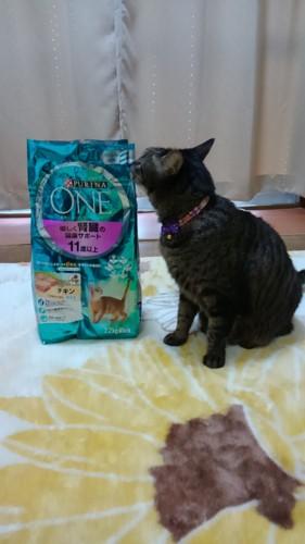 本商品と愛猫