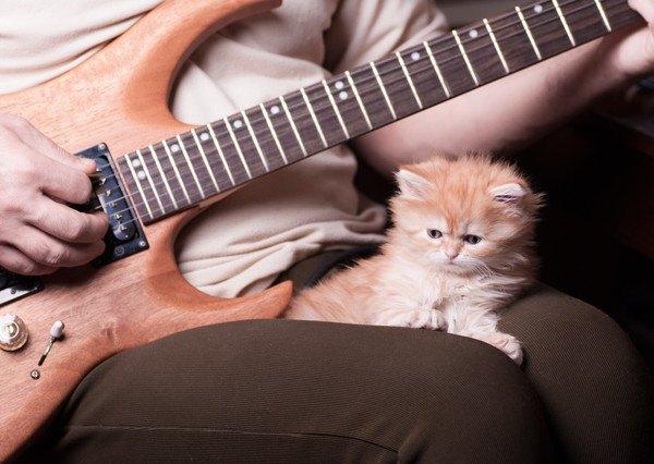 膝の上でギターをきく猫